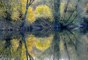 Dans les étangs de Bressey